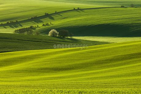 natureの写真素材 [FYI02348981]