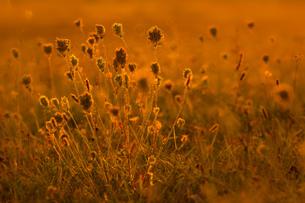 flowerの写真素材 [FYI02349065]