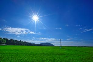 Peaceful Farm Landscapeの写真素材 [FYI02349141]