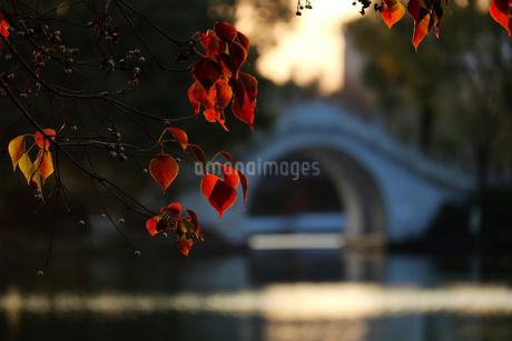 Arch Bridge,Chinaの写真素材 [FYI02349354]