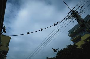Cloudy birdsの写真素材 [FYI02349402]