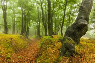 treeの写真素材 [FYI02349520]