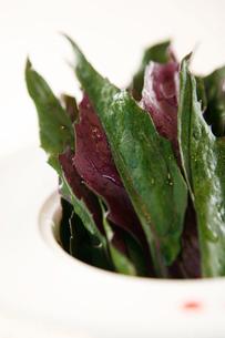 Salad leavesの写真素材 [FYI02349536]