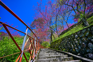 Overlooking of the stone ladderの写真素材 [FYI02349719]