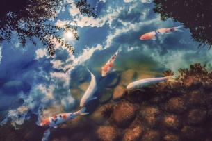 fishの写真素材 [FYI02349750]
