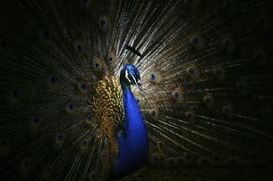 Abstract animalの写真素材 [FYI02349795]