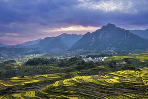 Rapeseed Flowers in Jiapeng, Jixi, Anhui Provinceの写真素材 [FYI02349876]
