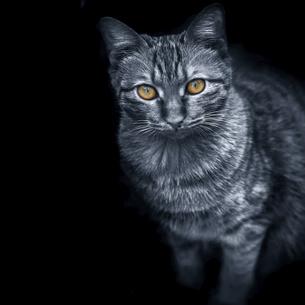 Abstract animalの写真素材 [FYI02349926]
