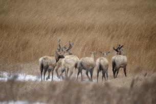 moose,Yancheng, Jiangsu,Chinaの写真素材 [FYI02350265]
