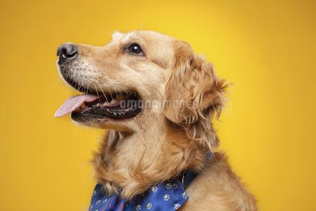 dogの写真素材 [FYI02350276]