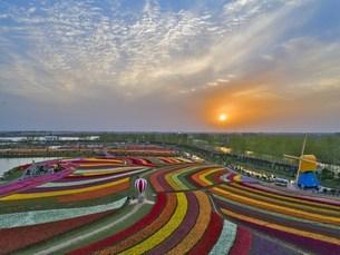 Flower Sea,Yancheng, Jiangsu, Chinaの写真素材 [FYI02350283]