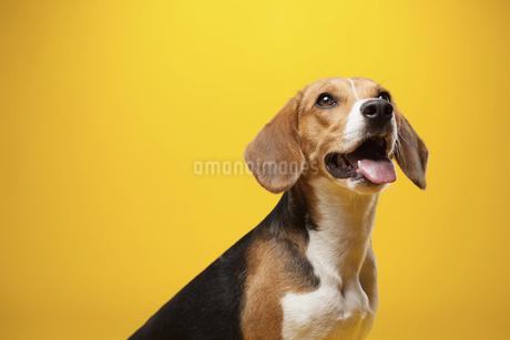 dogの写真素材 [FYI02350376]