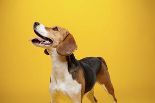 dogの写真素材 [FYI02350455]