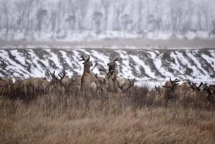 moose,Yancheng, Jiangsu,Chinaの写真素材 [FYI02350521]