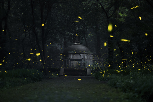 Linggu Temple at the night, Jiangsu, Chinaの写真素材 [FYI02350619]