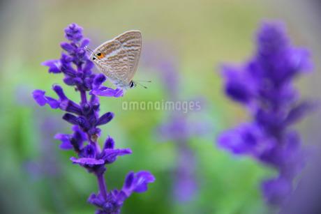 flowerの写真素材 [FYI02350856]