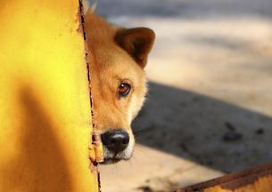dogの写真素材 [FYI02350872]