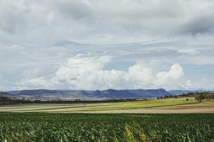 Autumn, fieldsの写真素材 [FYI02350930]