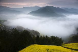 Morning mist , Anhui ,Chinaの写真素材 [FYI02351138]