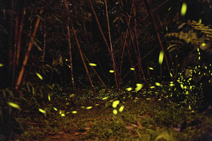 Puli ,Pasture Yen Family,fireflyの写真素材 [FYI02351339]