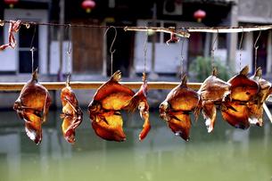 Sun dried fish,Chinaの写真素材 [FYI02351508]