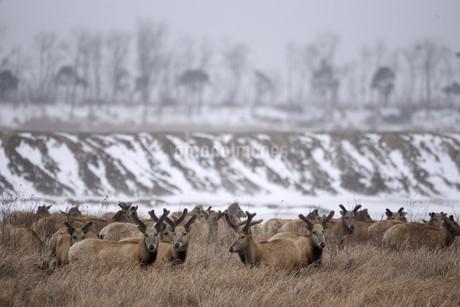 moose,Yancheng, Jiangsu,Chinaの写真素材 [FYI02351593]