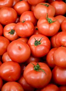 tomatoの写真素材 [FYI02351656]