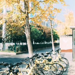 Bicycle, Kunming, Yunnan, Chinaの写真素材 [FYI02351712]