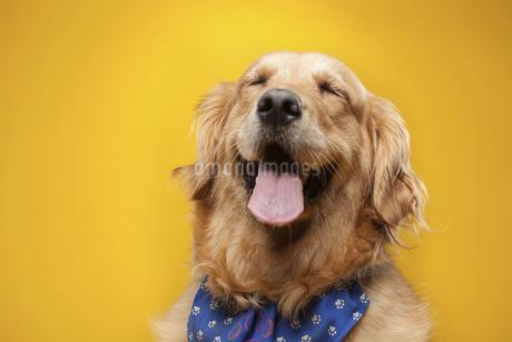 dogの写真素材 [FYI02351723]