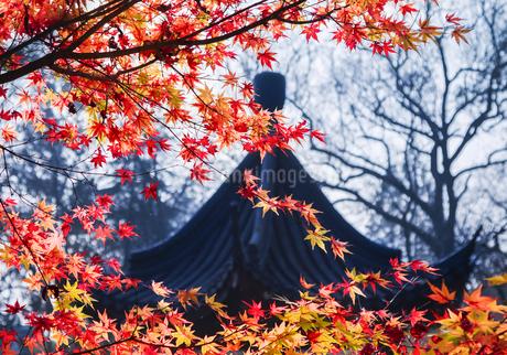 Autumn season, Red maple against the pavilion in Qixia Mountainの写真素材 [FYI02351785]