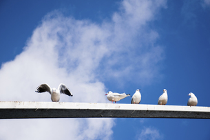 seagull,Kunming,Yunnanの写真素材 [FYI02352259]