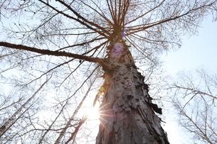 treeの写真素材 [FYI02353140]