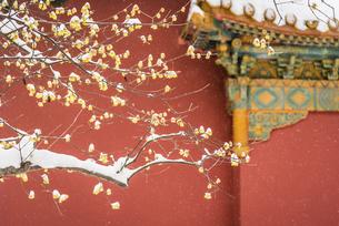 Ming Xiaoling,Nanjing, Jiangsu, Chinaの写真素材 [FYI02353243]
