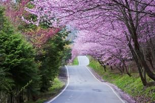 Taiwan,Wuling,Wuling Farm,Xueba,Xueba National Park,National Park,Taichung City,Taichung,Heping Distの写真素材 [FYI02353350]