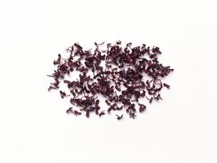紅芽の写真素材 [FYI02353381]