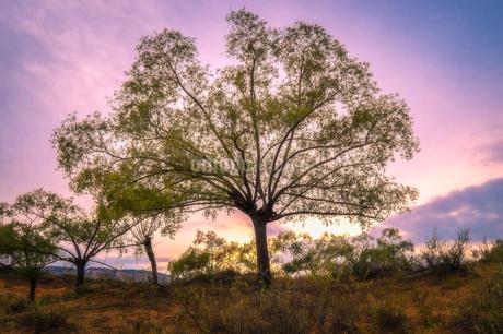 treeの写真素材 [FYI02353499]