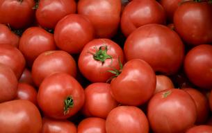 tomatoの写真素材 [FYI02353789]