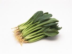小松菜の写真素材 [FYI02353965]
