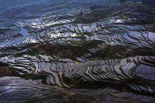 Terraces in Yuanyang, Yunnan,Chinaの写真素材 [FYI02353975]