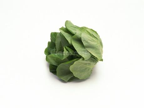 サラダ菜の写真素材 [FYI02353982]