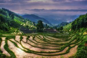 Ziquejie Terraces,Chinaの写真素材 [FYI02353993]
