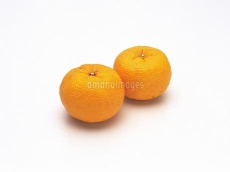 柚子の写真素材 [FYI02354020]