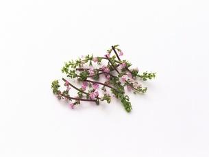花穂の写真素材 [FYI02354031]
