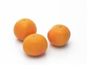 ルビーグレープフルーツの写真素材 [FYI02354054]