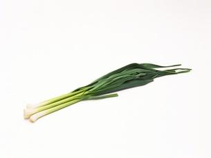 葉にんにくの写真素材 [FYI02354060]