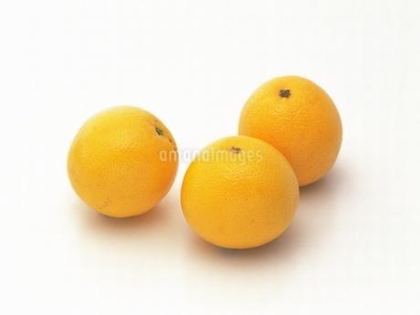 グレープフルーツの写真素材 [FYI02354067]