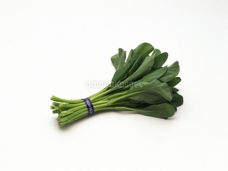 油菜心の写真素材 [FYI02354101]