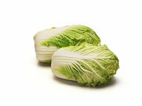白菜の写真素材 [FYI02354126]