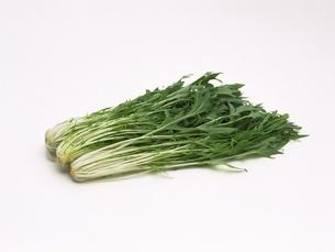 水菜の写真素材 [FYI02354161]