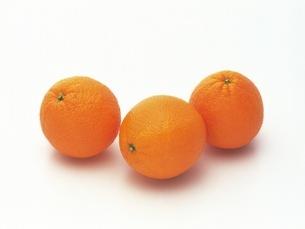 オレンジの写真素材 [FYI02354192]